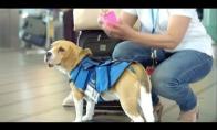 Naujas oro uosto darbuotojas