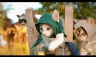 Kačiukai - nindzės