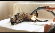 Katinas-narkomanas