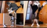 Parkūro katiniukas