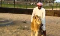 Pamišėlis arabas ant liūto