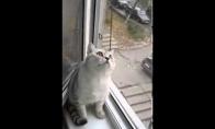 Labai susikaupęs katiniukas
