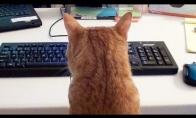 Kaip dirbti namuose su katėmis?