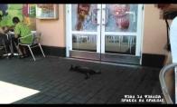 Katinas, kuriam išvis px ant visų