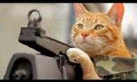 Katinas gelbėtojas