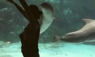 Gimnastės pasirodymas delfinams