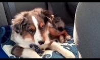 Šuniukas pabunda išgirdęs mėgstamą dainą