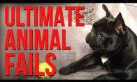 Nevykėlių gyvūnėlių FAIL rinkinys