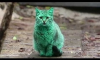 Žalias Bulgarijos gyventojas