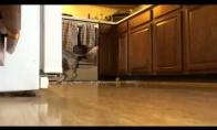 Kodėl su šuniu nežaidžiama namuose?
