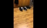 Katiniukai sprinteriai