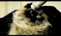 21 katė, kurioms buvo juoda diena