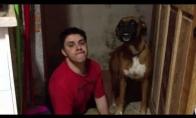 Šuns antrininkas
