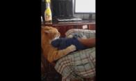 Psichinis katiniukas