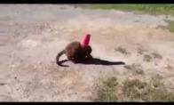 Vėpla katiniukas ir jo gelbėtojas