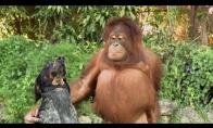 Neįprasčiausios gyvūnų draugystės