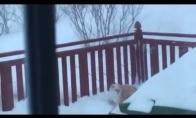 Katiniukui labai nepatinka žiema
