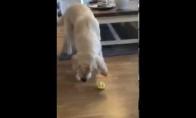 Šuo degustuoja citriną