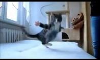 Mieliausias kačiukas pasaulyje