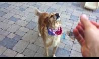 Žiauriai nerangus šuo