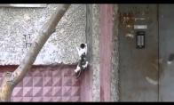 Katinas parkourina