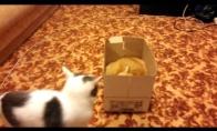 Mušis dėl dėžės