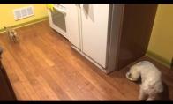 Šunelis nemėgsta valgyti vienas