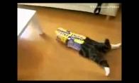 Katinas dėžių maniakas
