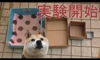 Šeimininkas patrolina šunį