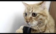 Katinas bučiuoja dulkių siurblį
