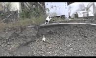 Katė išgelbsti savo mažylį