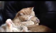 Broliška katiniukų meilė