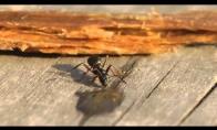 Kai skruzdėlė prisigeria