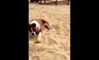 Šuo prieš laimą