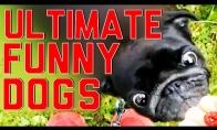 Durniausių šunų FAIL rinkinys