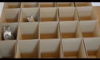 Kai 9 katės gauna 20 dėžių