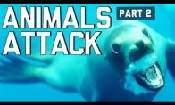 Gyvūnai puola žmones