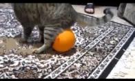 Katinas ir fizikos dėsniai