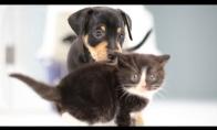 Kačiukai ir šuniukai pirmą kartą pamato vieni kitus
