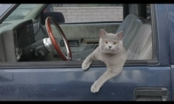 Katinas padeda atlikt triuką