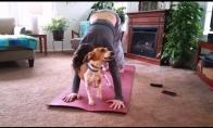 Šunys ir katės, kuriems joga nepatinka
