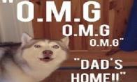 Šuns reakcija į 1,5 mėnesio nematytą šeimininką
