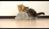 Katiniukai ir ledo burbulas