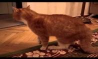 Katiniukas supyko, kad jam trenkė