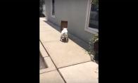Kvailas šuniukas labai mėgsta savo dėžę