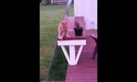 Katiniukas sėdi kaip žmogus