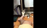 Kai labai nori įkąst šeimininkui, bet jo koja dvokia