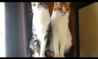 2 skirtingi katinai