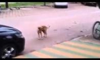 Šokantis šuo