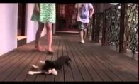 Šunelis gina savo šeimininkę